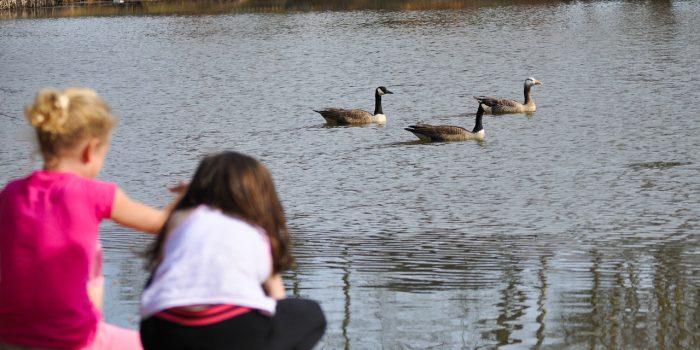 Pond Playtime!